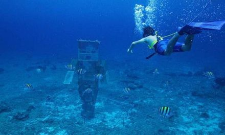 Minecraft Players Raise $100,000 to Help the Coral Reefs