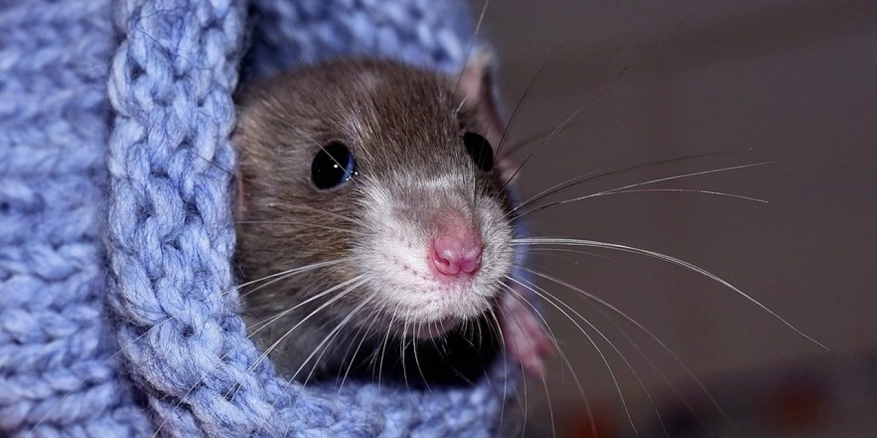 6 videogame rats that are just the worst